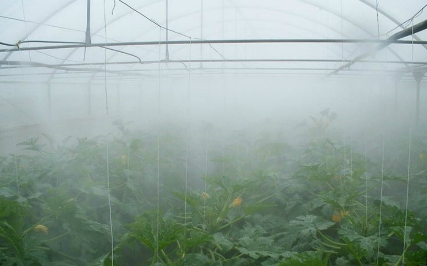 туман в теплице