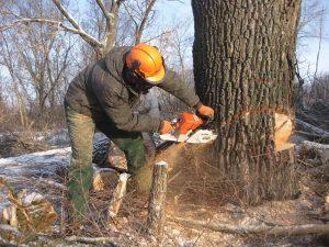 Мужчина пытается спилить дерево