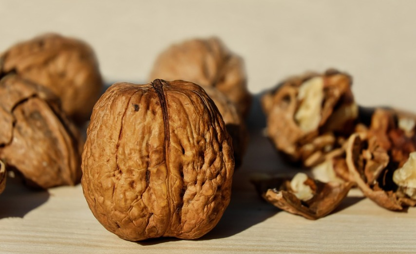 С помощью орехов можно протимулировать иммунитет