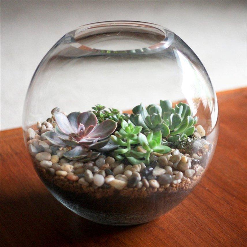 Какие растения подойдут для выращивания в аквариуме?