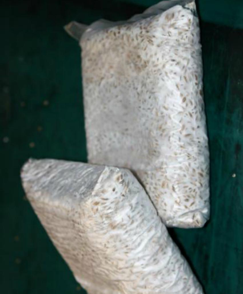 мицелий вешенка
