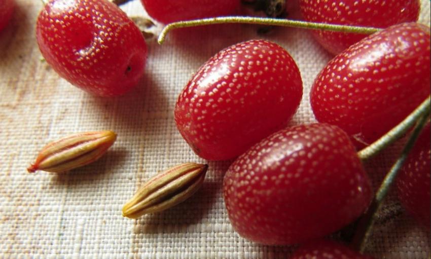 гуми ягоды