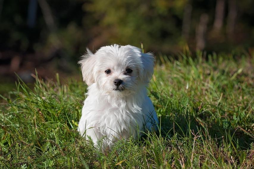 Городская собака в частном доме