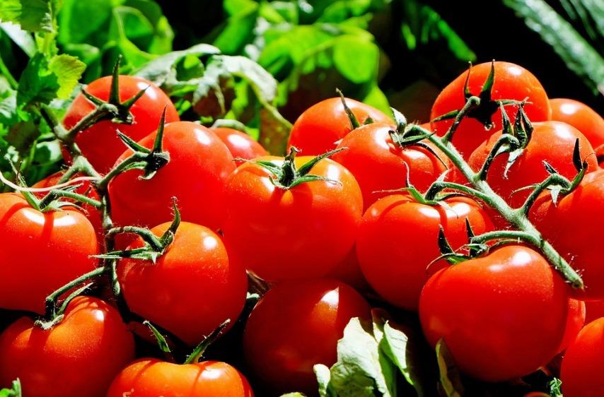 Приготовление подкормок для томатов