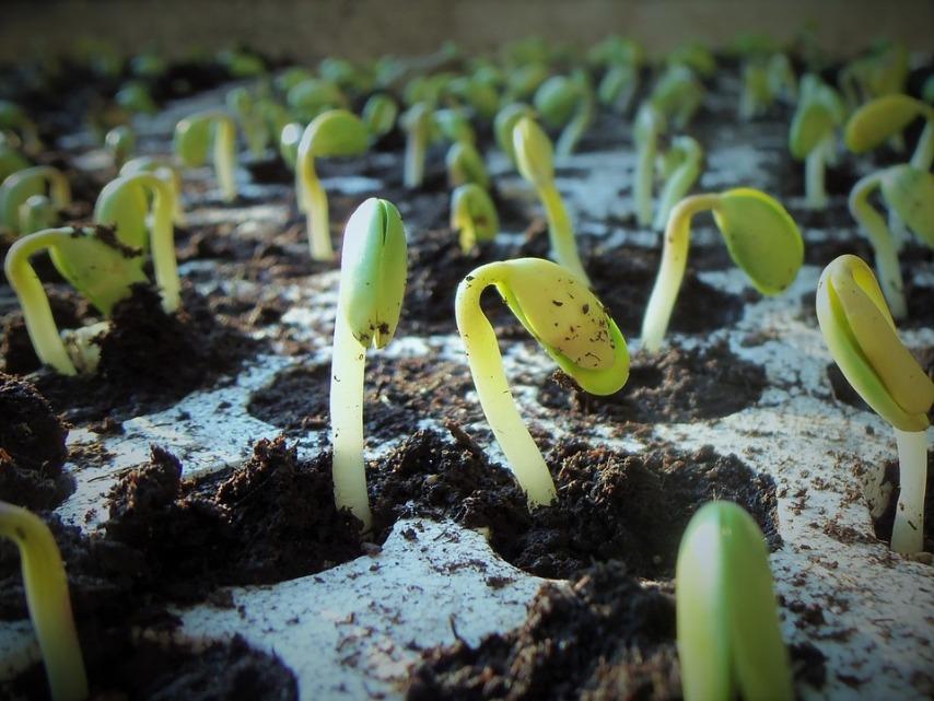 Использование стимуляторов роста для получения рассады
