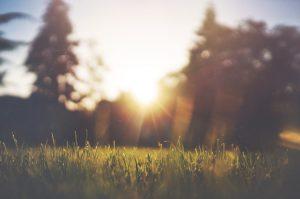 Как создать красивую лужайку