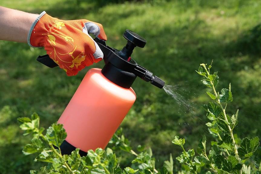 Мыльный раствор: прекрасное средство для обработки растений