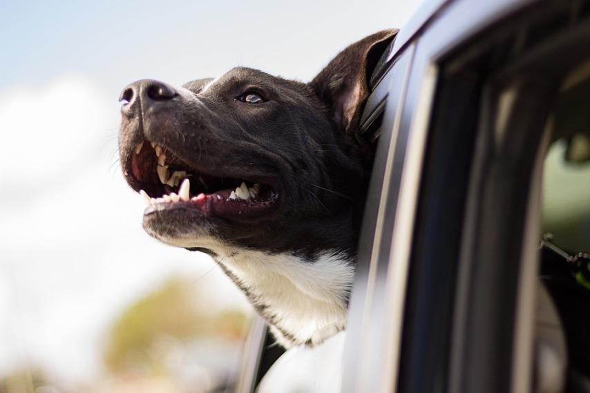 6 советов, как приучить собаку к будке