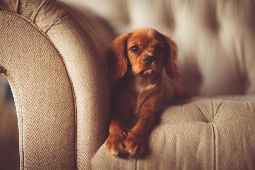 Как обустроить место для собаки