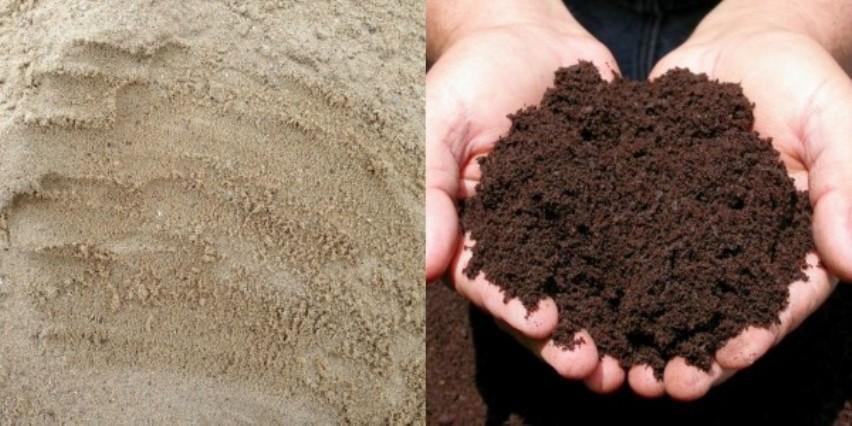 Почва для туи