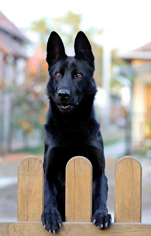 Забор и собака