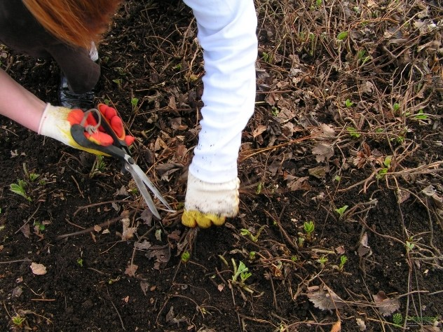 удалить листья клубники