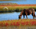 Хранение кормов для лошади