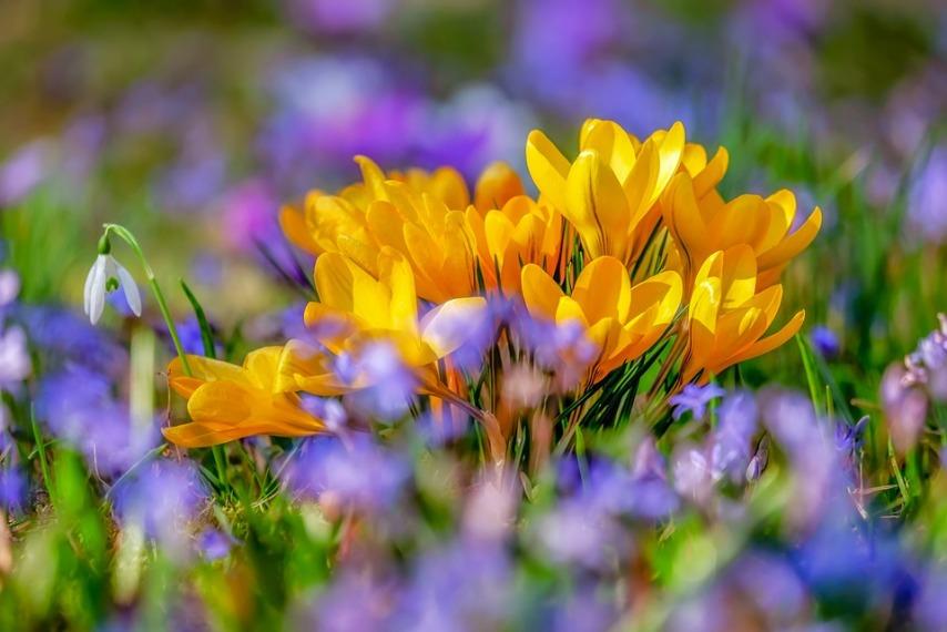 6 неожиданных и эффективных советов на весну для садоводов