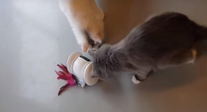 Кошки, играющие с роботом