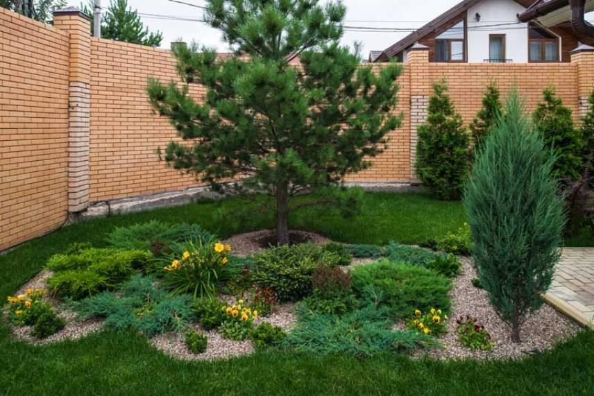 Как посадить сосну: инструкция и рекомендации