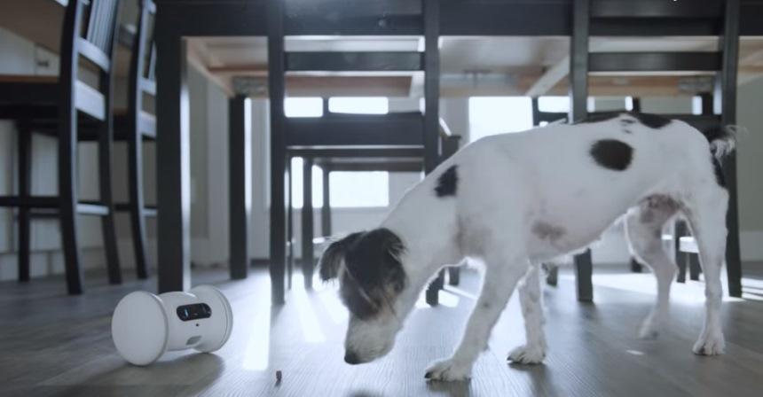 Робот выдает корм собаке