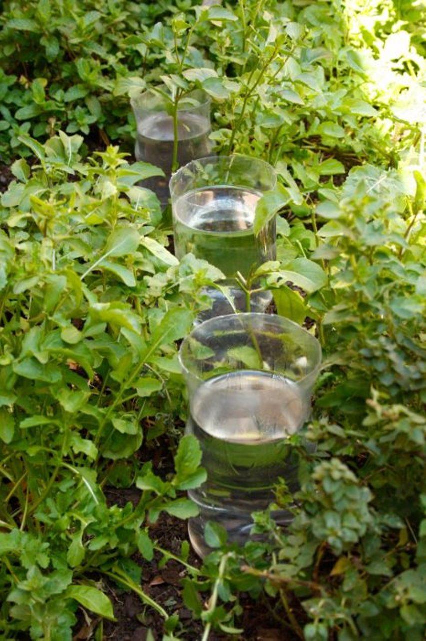 Бутылки от засухи