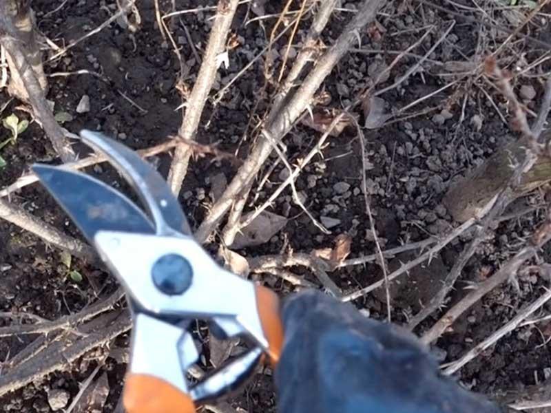 обрезка крыжовника