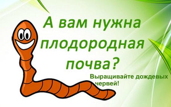 Как разводить червей для рыбалки в огороде