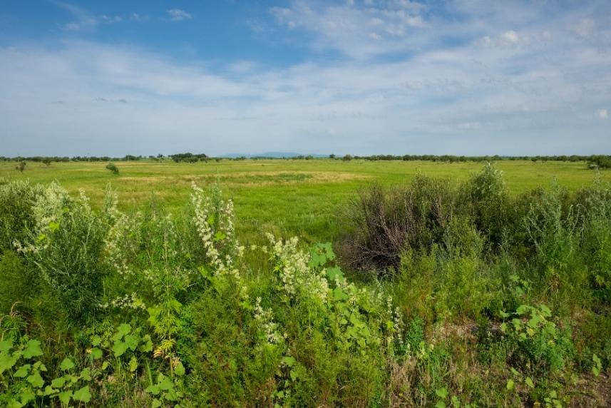 Дальневосточный гектар: необработанные земли