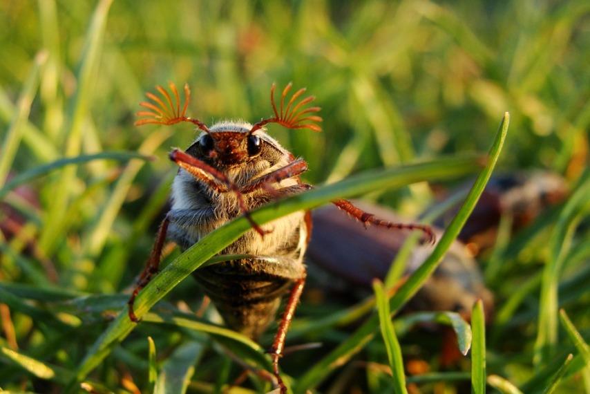 Ловушки для жука