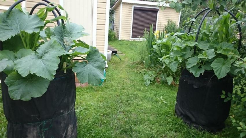 Выращивание в пакетах