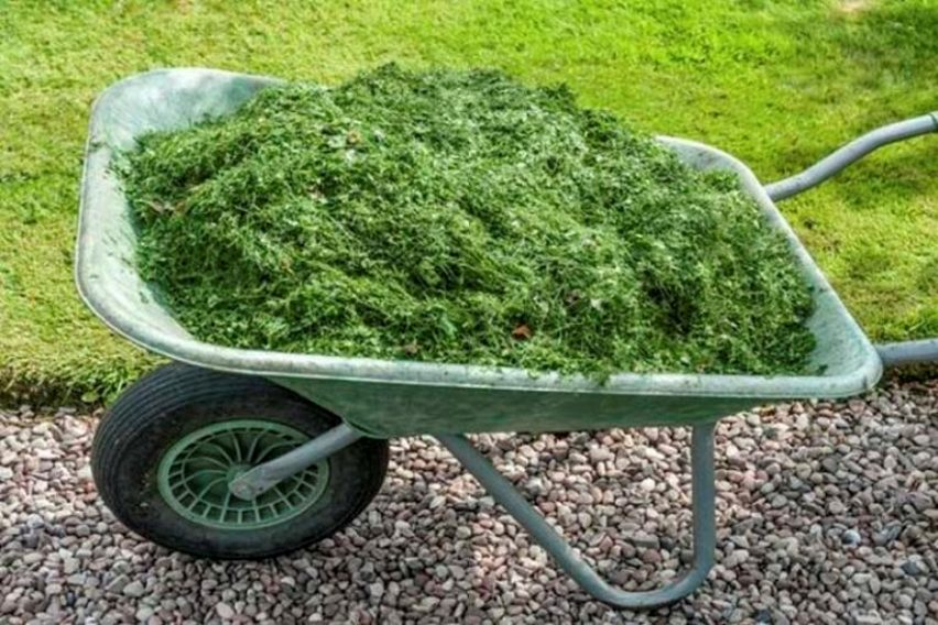 Зеленое удобрение