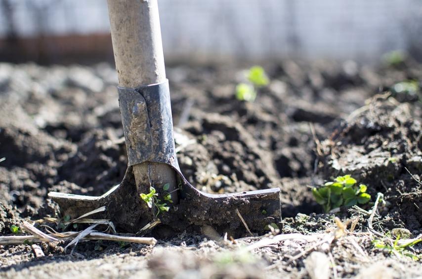 Почву ежегодно перекапывают и рыхлят чтобы
