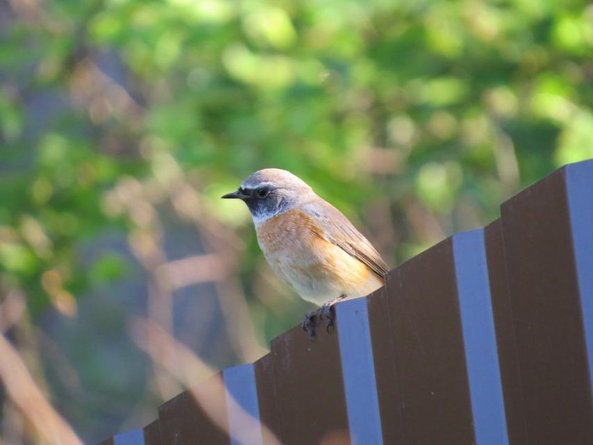 Следы от птиц