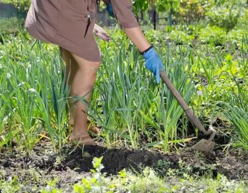 уничтожить сорняки прополкой