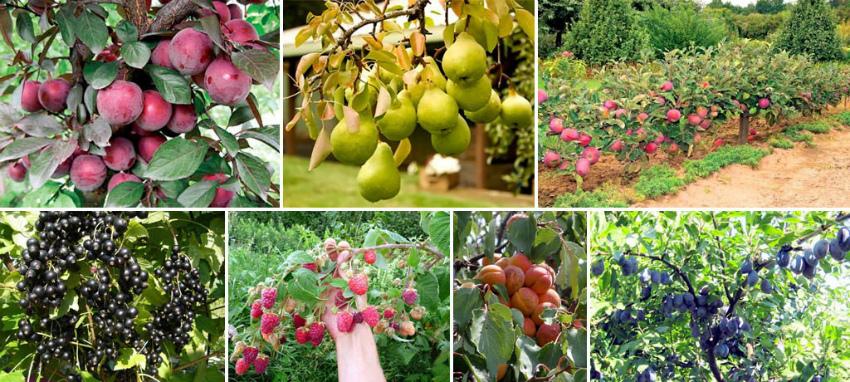Плодовые культуры