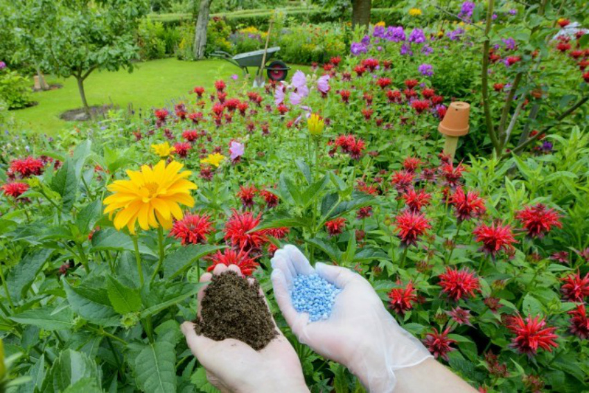 Чем удобрять декоративные и плодовые культуры во второй половине лета