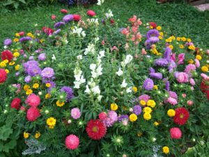 Цветник в августе