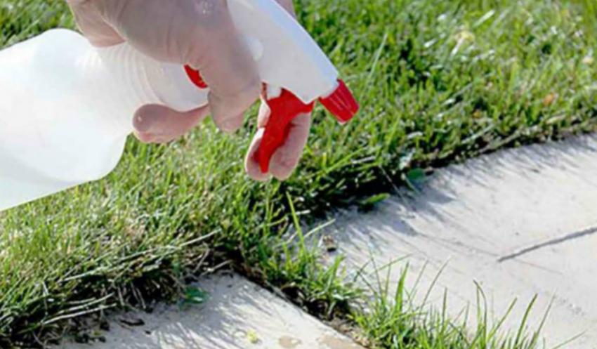 Сорняки на дорожках между клумбами и грядками: простой способ борьбы
