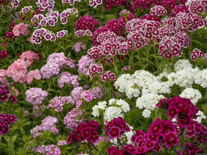 Цветник в августе: 10 неотложных дел цветовода