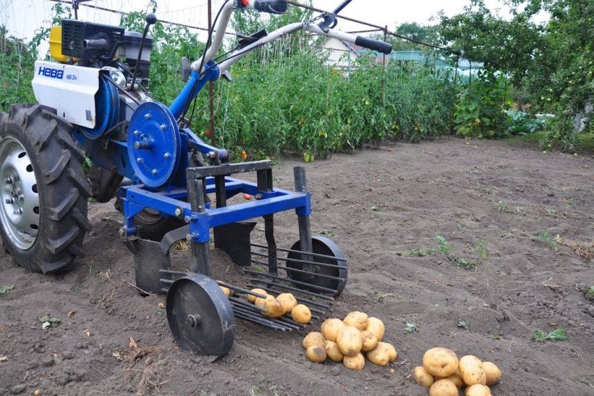 Картофелекопалка в работе
