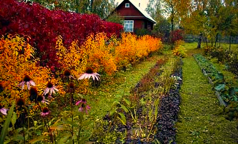 Грядки осенью