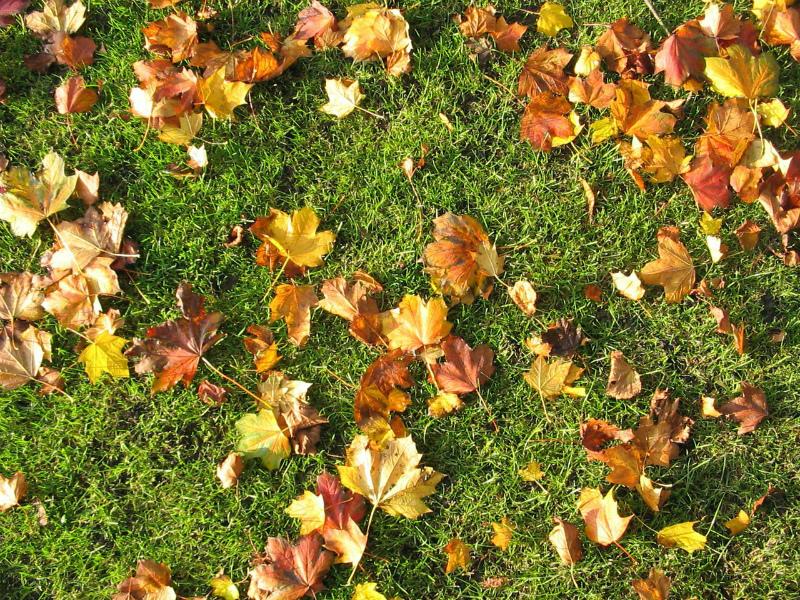 Листья на газоне