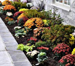 Многолетние цветы на осенней клумбе