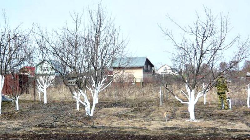 белят деревья осенью