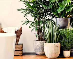 Комнатные растения - очистители