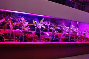 Лампа для растений