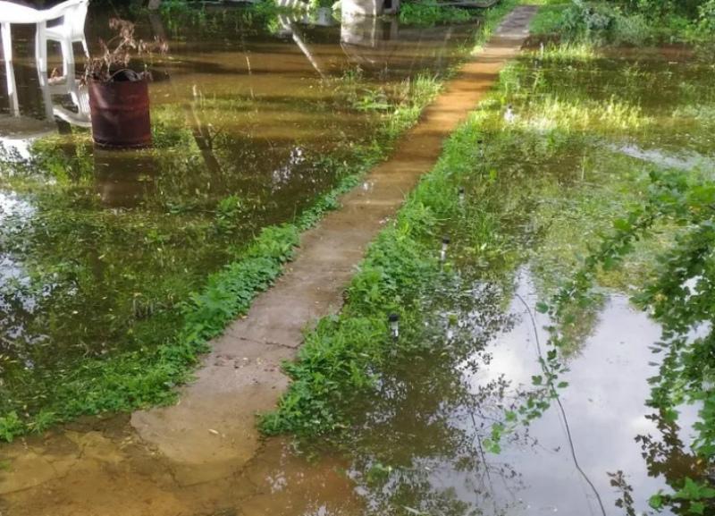 Как эффективно осушить земельный участок от грунтовых вод