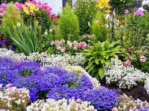 Душистый сад своими руками