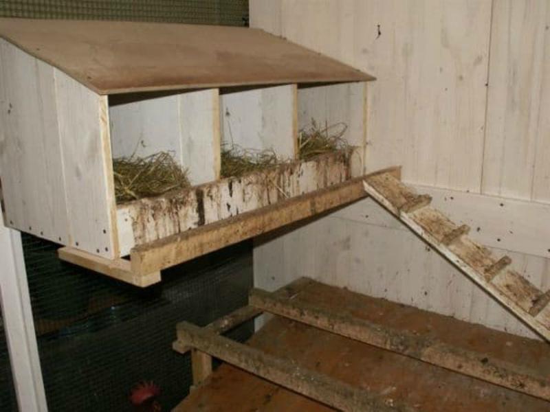 Насест и гнезда для индюшек