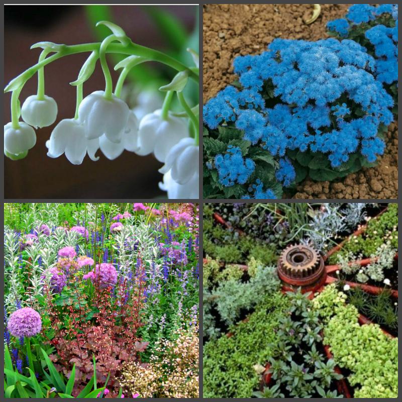 Создаем ароматный сад своими руками