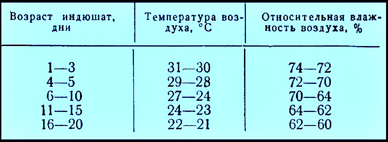 Температурный режим для индюшат