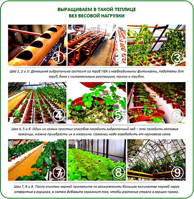 выращивание на гидропонике