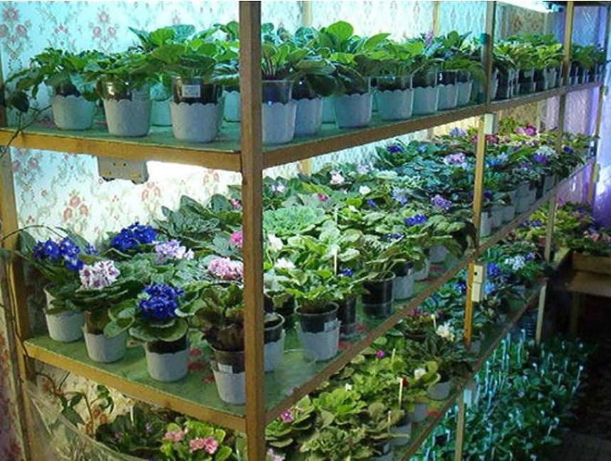 Выращивание в подвале